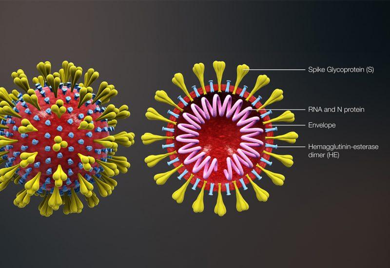 "<span style=""font-size:48px"">从病毒到免疫, <br />""科学地""揭开新冠病毒的神秘面纱</span>"